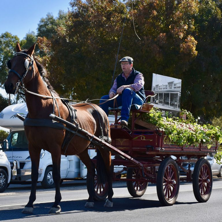 Scott Evans, Barossa Carriages carts the fresh fruit for the Barossa Co-op.